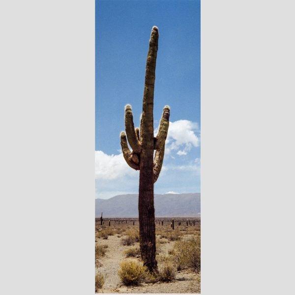 décoration murale cactus